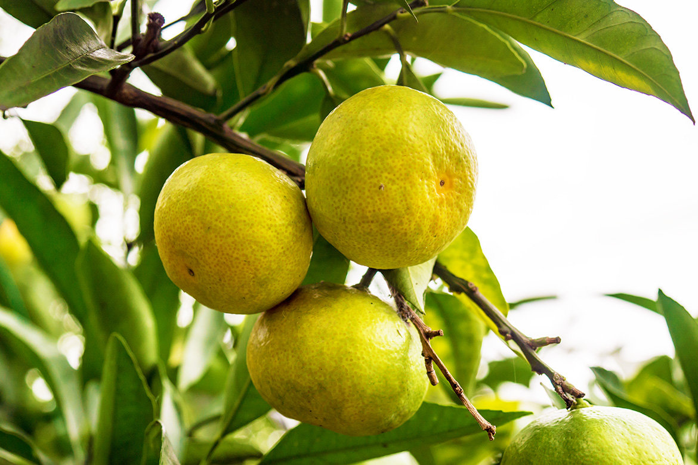 秋の訪れ、柑橘シーズン到来